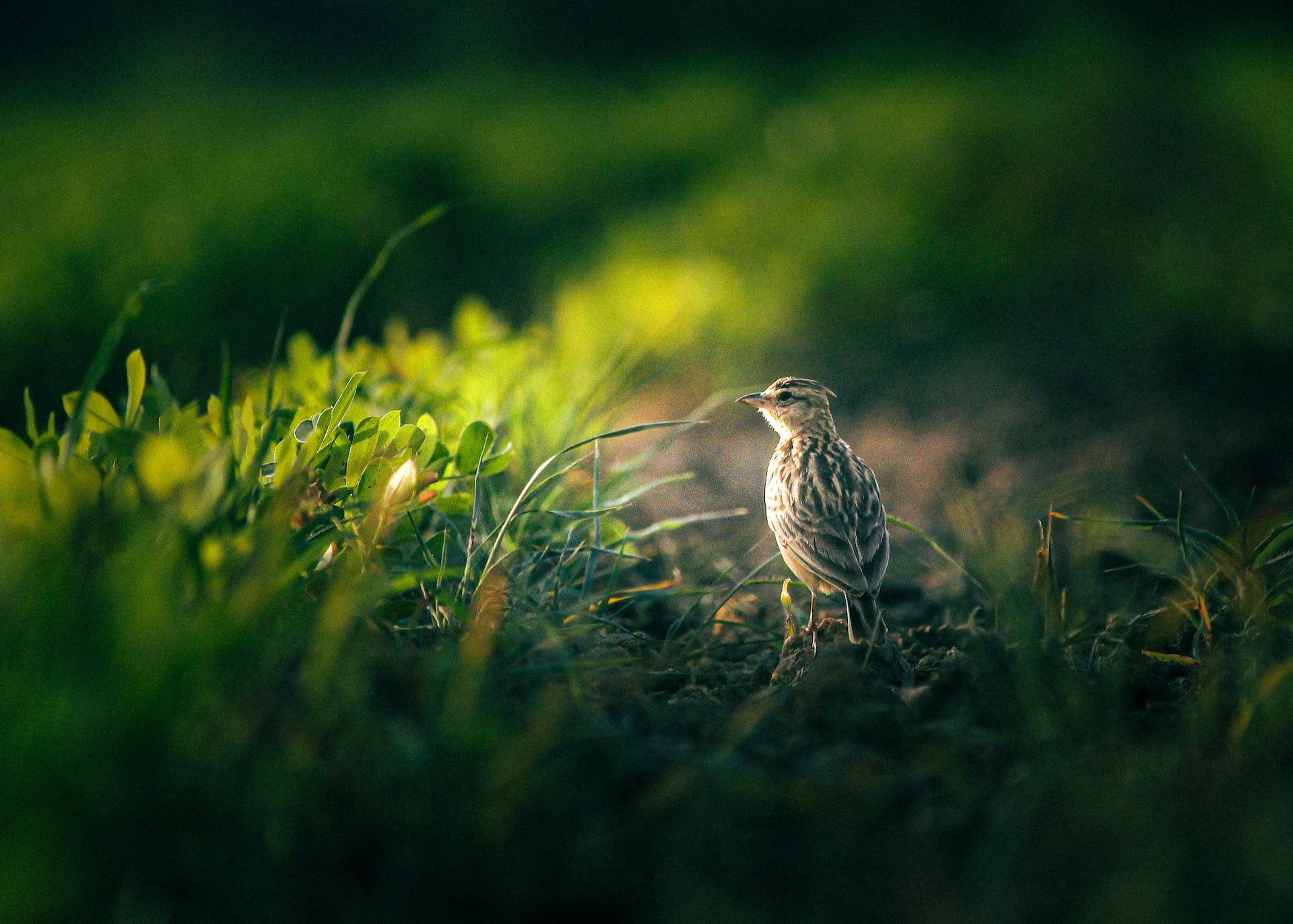 Skřivaní políčka - photo by Jalpa Malam / Shutterstock.com