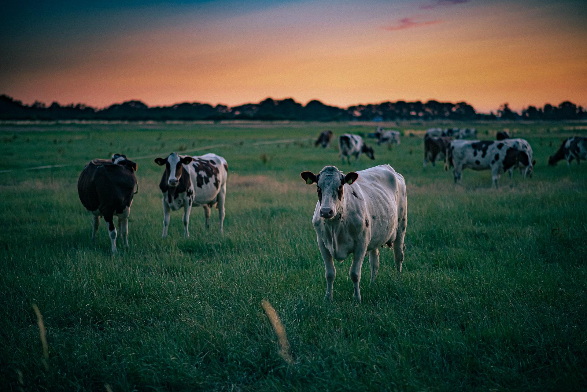 Nespasení části pastviny