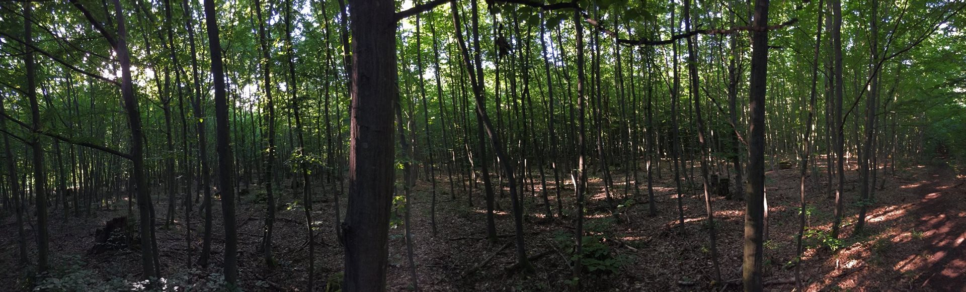 Zalesnění orné půdy